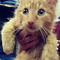 Adopt A Pet :: Trombone - Trevose, PA