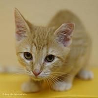 Adopt A Pet :: Beetle - Tucson, AZ