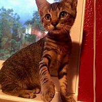 Adopt A Pet :: Malcolm - Austin, TX