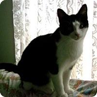 Adopt A Pet :: Panda - Orillia, ON