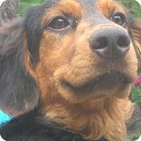 Adopt A Pet :: Hans - latrobe, PA