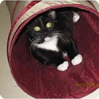 Adopt A Pet :: Bubbles - Catasauqua, PA