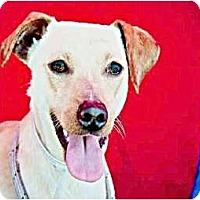 Adopt A Pet :: Bucko - Poway, CA