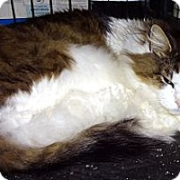 Adopt A Pet :: Boone - Saint Albans, WV