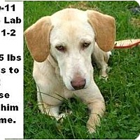 Adopt A Pet :: # 540-11 @ Animal Shelter - Zanesville, OH