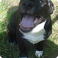 Adopt A Pet :: Zeke-Low Adoption Fee $100 - Jarrettsville, MD