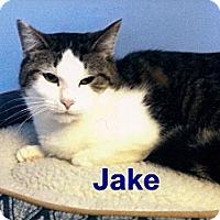 Adopt A Pet :: Jake - Medway, MA