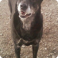 Adopt A Pet :: Molly - Toledo, OH