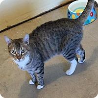 Adopt A Pet :: Shatzi - Sacramento, CA