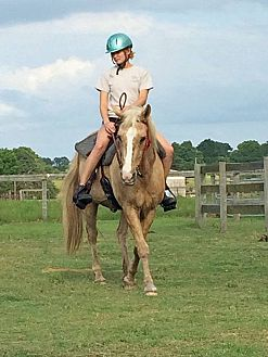 Palomino/Quarterhorse Mix for adoption in Morriston, Florida - Sophie