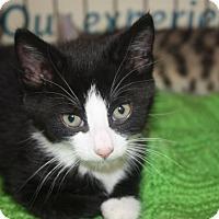 Adopt A Pet :: Virgil (LE) - Little Falls, NJ