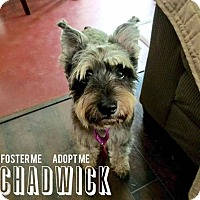 Adopt A Pet :: Chadwick - San Antonio, TX