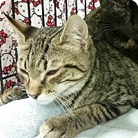 Adopt A Pet :: Bobbi -Adoption Pending! - Colmar, PA