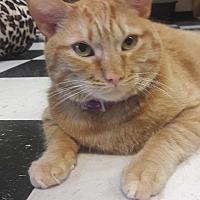 Adopt A Pet :: Brisby (Pumpkin) - Leonardtown, MD