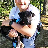 Adopt A Pet :: Bonnie - in Maine - kennebunkport, ME