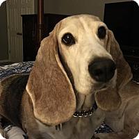 Adopt A Pet :: Gypsy - Grapevine, TX