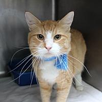 Adopt A Pet :: Alex - Warwick, RI