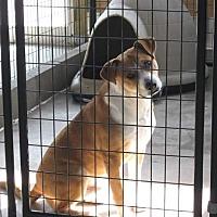 Adopt A Pet :: Petey - Leslie, AR