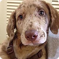 Adopt A Pet :: Mocha - Cumming, GA