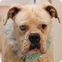 Adopt A Pet :: Tippsy - Sunderland, MA