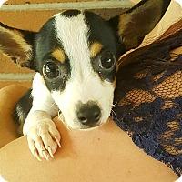 Adopt A Pet :: Pete - Lancaster, PA