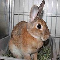 Adopt A Pet :: JULIET - Los Angeles, CA