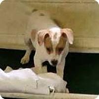 Adopt A Pet :: Wiggle Butt - Chantilly, VA