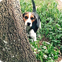 Adopt A Pet :: Erin - Houston, TX