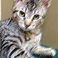 Adopt A Pet :: Grant - Channahon, IL