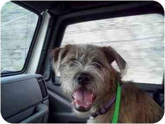 Terrier (Unknown Type, Medium) Mix Dog for adoption in Hendersonville, Tennessee - Wiley