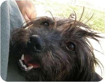 Havanese Mix Dog for adoption in Meridian, Idaho - Mimi