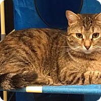 Adopt A Pet :: Rose - Greenville, SC