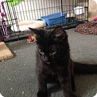 Adopt A Pet :: Cosmos - Sterling Hgts, MI