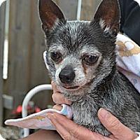 Adopt A Pet :: Loki - Hamilton, ON