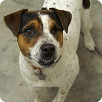 Adopt A Pet :: Mayan In College Station - Houston, TX