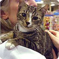 Adopt A Pet :: Sugar - Pittstown, NJ