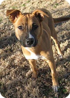 Shepherd (Unknown Type)/Hound (Unknown Type) Mix Puppy for adoption in Huntsville, Alabama - Penny