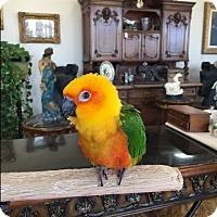 Adopt A Pet :: Echo - Burleson, TX