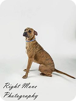 Terrier (Unknown Type, Medium) Mix Dog for adoption in North Myrtle Beach, South Carolina - Honey aka Angel