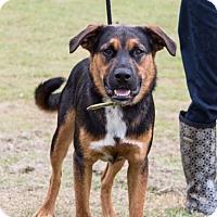 Adopt A Pet :: Carl - Hershey, PA