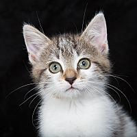 Adopt A Pet :: Quin - Nashville, TN