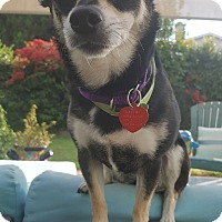 Adopt A Pet :: HARRAH - Los Angeles, CA