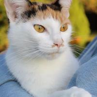 Adopt A Pet :: Gracie - Anderson, IN