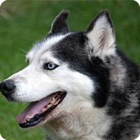 Adopt A Pet :: DB - Harvard, IL