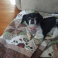 Adopt A Pet :: PENNY - WOODSFIELD, OH