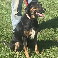 Hound (Unknown Type) Mix Dog for adoption in Slidell, Louisiana - Edna.