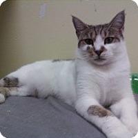 Adopt A Pet :: Annie Lee - Fort Lauderdale, FL