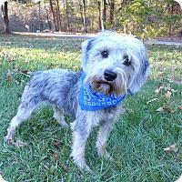 Adopt A Pet :: Torie - Mocksville, NC