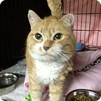 Adopt A Pet :: Vivian - Byron Center, MI