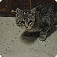 Adopt A Pet :: Tricky - Rockaway, NJ
